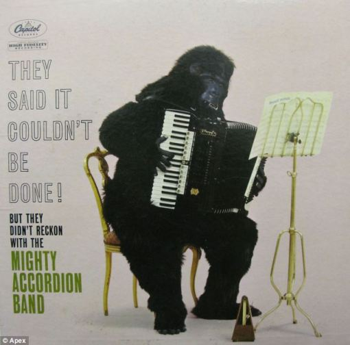 Gorilla Accordian